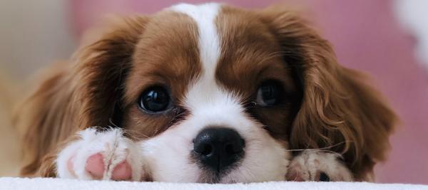 راهنمای کامل راهاندازی فروشگاه اینترنتی لوازم حیوانات خانگی (پت شاپ آنلاین)